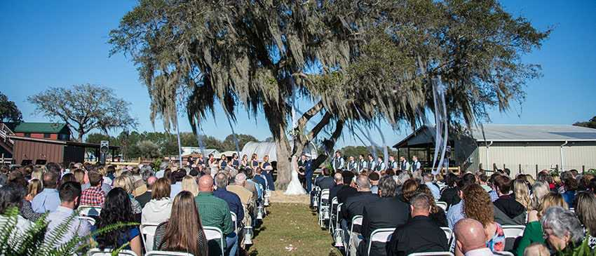 outdoor wedding ceremony in front of large oak tree on sunny day